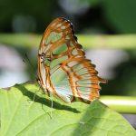 butterfly-971810_640